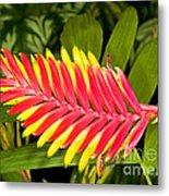 Bromeliad Blossom - Tillandsia Metal Print