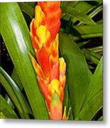 Bromeliad Flower Metal Print