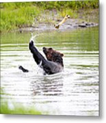 Brown Bear Playing With A Bone Metal Print