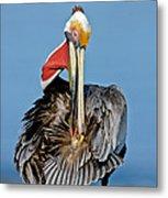 Brown Pelican Preening Metal Print