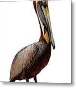 Brown Pelican-7 Metal Print