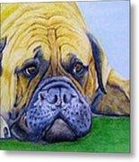 Bulldog Metal Print by Prashant Shah