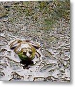 Bullfrog In The Mud Metal Print