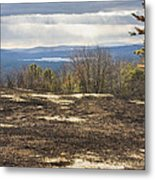 Burnt Blueberry Field In Maine Metal Print