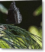 Butterfly Collection Metal Print