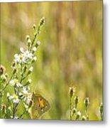 Butterfly In A Field Of Flowers Metal Print