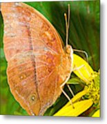 Butterfly Mimicry Metal Print