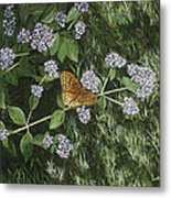 Butterfly On Oregano Metal Print