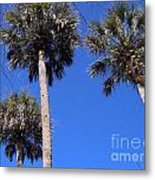 Cabbage Palms Metal Print