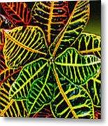 Cadiaeum Crotons Tropical Houseplant Shrub Metal Print