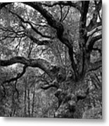 California Black Oak Tree Metal Print
