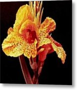 Canna Lilly In New Orleans Metal Print