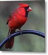 Cardinal Metal Print by John Kunze