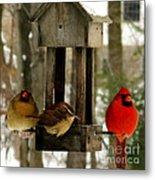 Cardinals And Carolina Wren Metal Print