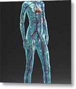 Cardiovascular System Female Metal Print