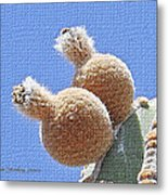 Cardon Cactus Fruit Metal Print