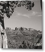 Cathedral Rock Framed By Juniper In Sedona Arizona Metal Print