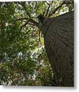 Ceiba Tree Metal Print
