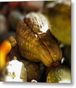 Celebration Of The Coming Of Fall Metal Print