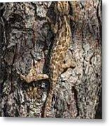 Chameleon Climbing Metal Print