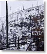 Charred Bones Of The Forest Metal Print
