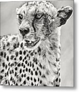 Cheetah Metal Print by Adam Romanowicz