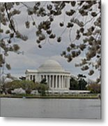 Cherry Blossoms With Jefferson Memorial - Washington Dc - 01137 Metal Print by DC Photographer