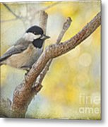 Chickadee With His Prize   Metal Print