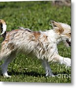 Chinese Crested Dog Metal Print