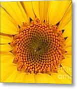 Chipmunk's Peredovik Sunflower Metal Print