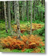 Cinnamon Ferns And Red Spruce Trees Metal Print