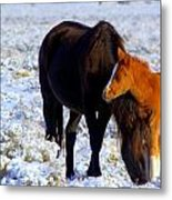 Close To You  Metal Print by Jeanne  Bencich-Nations