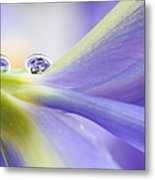 Close Up Iris Metal Print