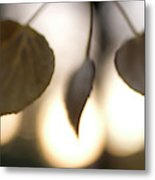 Close-up Of Aspen Leaves In Autumn Metal Print