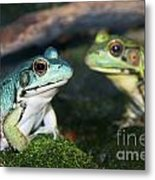 Close-up Of Blue And Green Frogs Metal Print