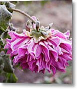 Close-up Of Flowers Covered By Frost Metal Print