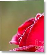 Close-up Of Red Rose With Water Drops Metal Print