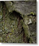 Closeup Of Bark Covered In Lichen Metal Print