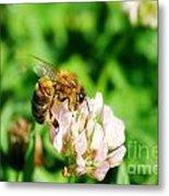 Clover Bee Metal Print
