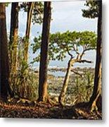 Coastal Rainforest Havelock Isl India Metal Print