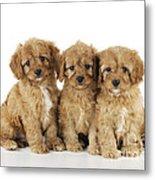 Cockapoo Puppy Dogs Metal Print