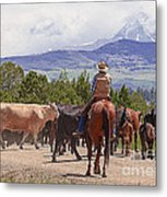 Colorado Cowboy Cattle Drive Metal Print