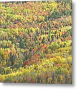 Colorful Autumn Forest In Mount Blue State Park Weld Maine Metal Print