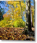 Colorful Fall Autumn Park Metal Print