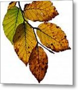 Colorful Leaves Isolated On A White Background Metal Print