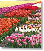 Colors Of Holland Metal Print