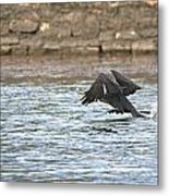 Cormorant Water Takeoff Metal Print