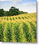Corn Field Metal Print by Elena Elisseeva