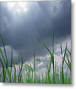 Corn Plant With Thunderstorm Clouds Metal Print