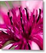 Corny Flower Metal Print